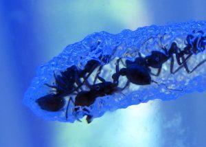 Coronavaccin: versneld ontwikkelen als een mierenhoop. Foto(c) Steve Jurvetson